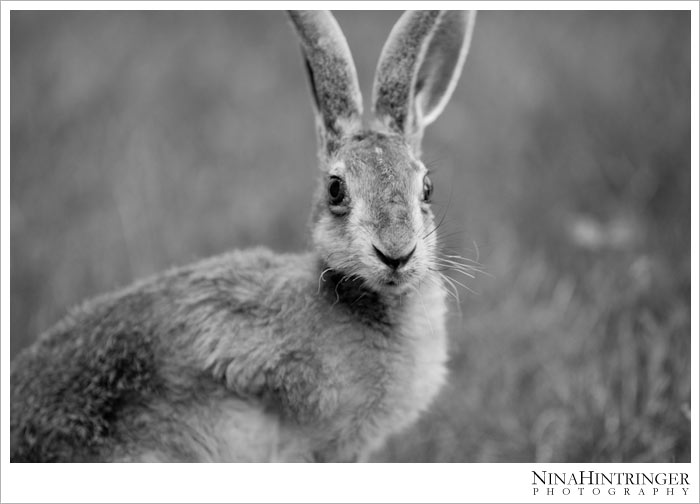 Hare Hugo | 2 years ago - Blog of Nina Hintringer Photography - Wedding Photography, Wedding Reportage and Destination Weddings